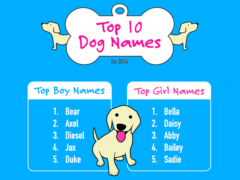 Really Cool Boy Dog Names