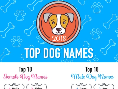 Top Dog Names of 2018 Infographic vector illustration dog infographic