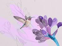 Hummingbird & flower illustration