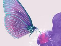 Butterfly  Watercolo Art Giclee Illustration