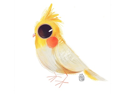 Cute Birds: Fairybird fairybird cute bird art childrens illustration digital procreate digital painting digital art digitalart illustration children