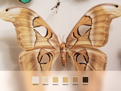 Color Palette - Butterfly