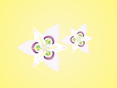 Lyall's Mariposa design flower nature flower illustration illustrations illustration