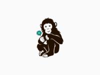 Baby Chimpanzee