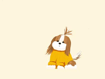 Hi Coco pet shih tzu dog