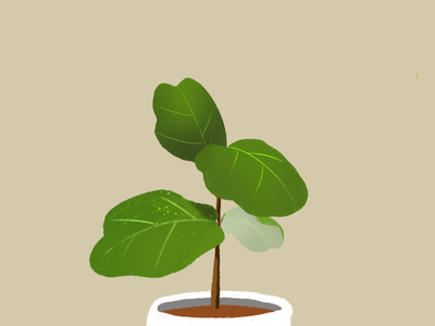 Ficus tree illust plant ficus tree