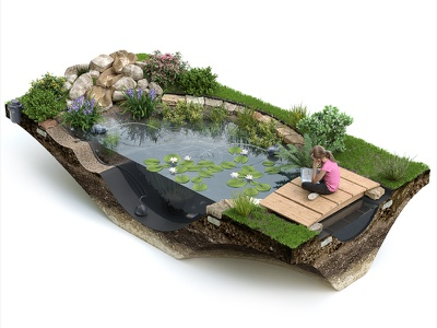 Liner Pond 3D Infographic garden plants lake ecology pond water nature cutaway cut-away creative 3d infographic