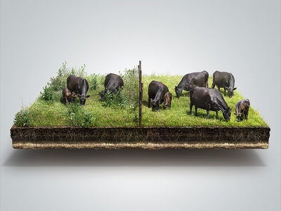 Weed Control 3D Infographic root grass farming farm angus cattle cow pasture agricultural weed cgi 3d