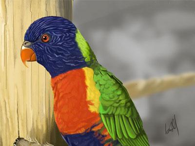 Honeymoon Bird realism realistic photoshop animal animal illustration bird painting digital painting parrot illustration digital painting