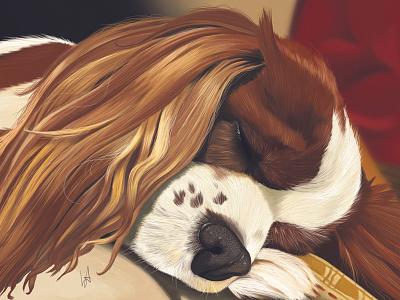 Sleepy portraiture realism digital portrait pet portrait illustration photoshop commission digital art