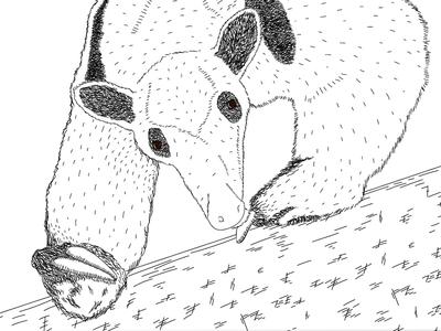 Day 13 – Tamandua animal hatching realistic anteater ant tamandua drawing illustration 30daychallenge