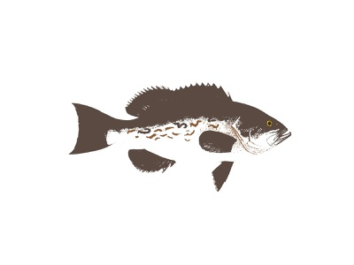 saltwater fish illustrations saltwater red snapper sailfish grouper vector design logo icon packaging illustration