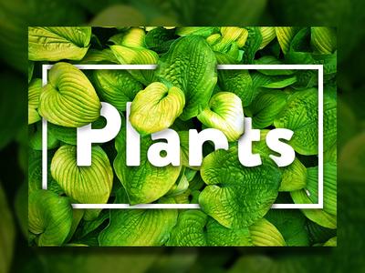 Plants! nature photography photo plants plant