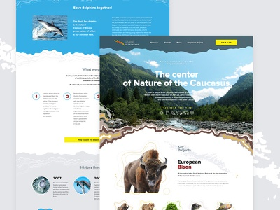 The Center of Nature of the Caucasus ux ui nature clear website web curves colors forms landing