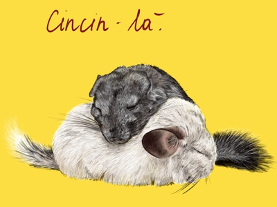 Chinchilla illustration sleep realistic soft yellow animal illustration animal chinchilla