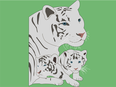 White Tiger branding vector flat illustrator graphic design design illustration art animation
