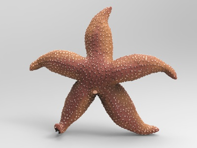 Star 3d app 3d model biology science character