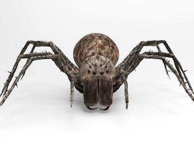 Spider 3d app 3d model biology science character