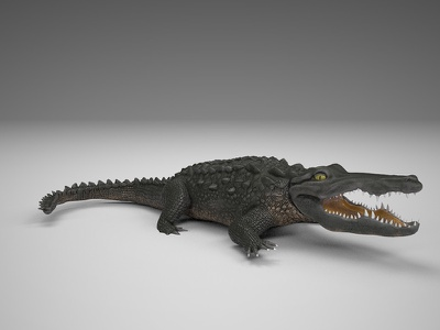 Crocodile 3d model animal biology crocodile