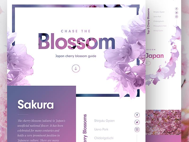 Cherry Blossom Landing Page 🌸 website web design web ux ui travel clean landing page homepage concept japan
