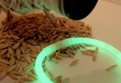 Glow seed