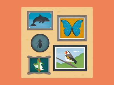 Looking at Nature gallery frame dolphin insect bettle frog bird butterfly conservation nature wildlife animal science editorial