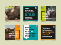 Save the Rhino social assets
