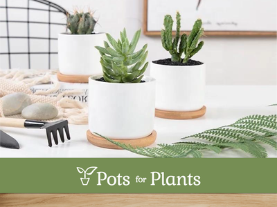 Pots for Plants modern clean minimalist logo pattern pots plants letterhead packaging design adobe indesign adobe illustrator cc adobe photoshop business card design adobe illustrator logo logomark logo design brand identity brand design