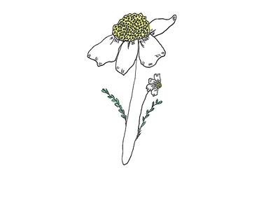 Daisy illustration drawing design
