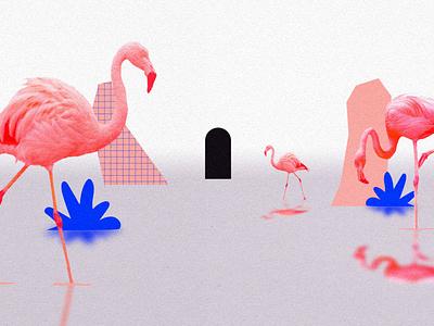 Flamencos graphic design motion graphics collage illustration ilustracion motion colors animation debut 2d