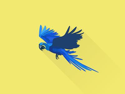 Hyacinth Macaw works illustrator