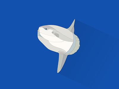 Ocean Sunfish works illustrator