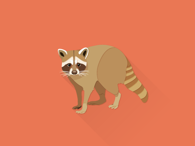 Raccoon works illustrator