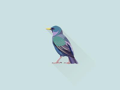 Starling works illustrator
