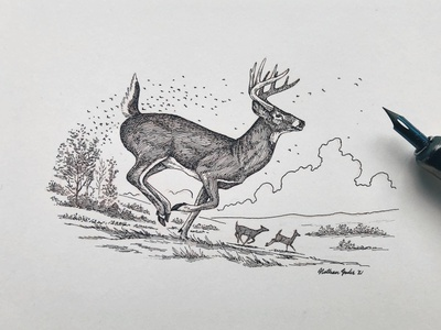 Whitetail Buck linework etching traditional pen drawing line art line drawing pen and ink animals animal nature buck hunting sportsman wildlife outdoors whitetail