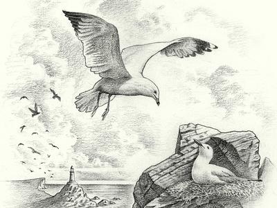 Gulls nature landscape ocean sea lighthouse nautical coast birds bird seagull gull pencil mediums medium traditional graphite process work in progess sketch illustration
