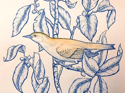Bird illustration colored pencil bird branch leaves