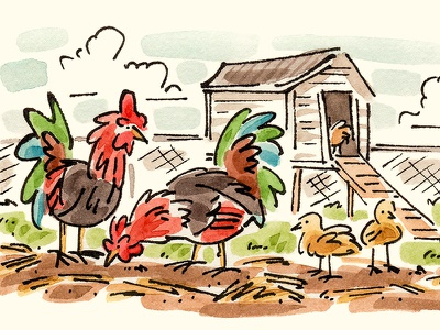 Chickens coop house farm chicks roosters chickens watercolor illustration
