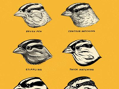 Six Sparrows digital illustration hatching stippling pen and ink brush and ink bird nature illustration