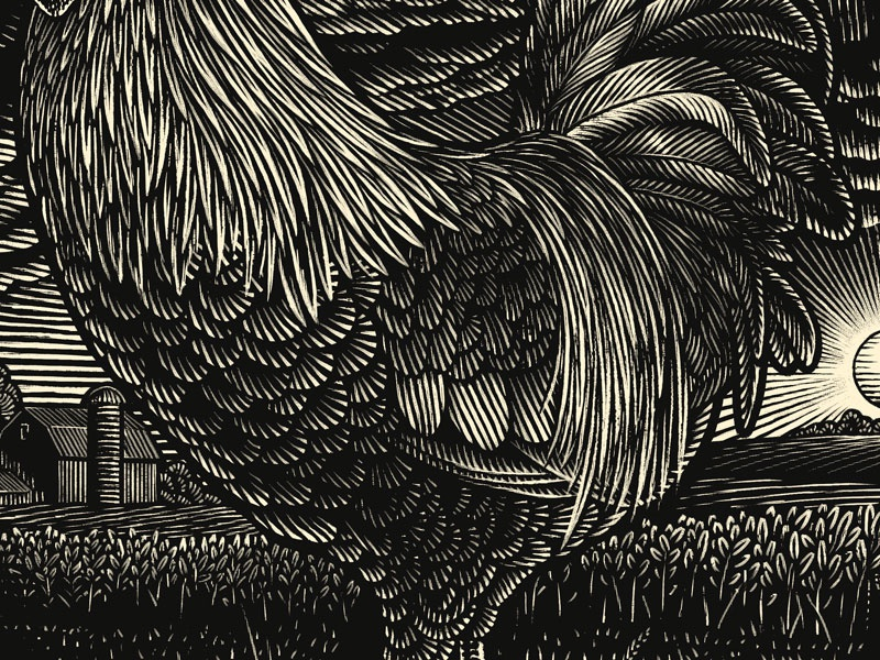 Rooster chicken nature farm rooster digital engraving scratchboard woodcut pen and ink illustration