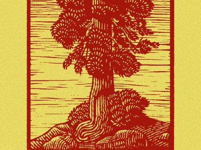 Tree trees tree outdoors nature digital etching scratchboard engraving editorial illustration