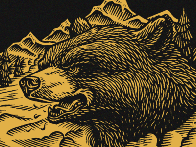 Bear digital scratchboard woodcut engraving wildlife nature outdoors bear illustration