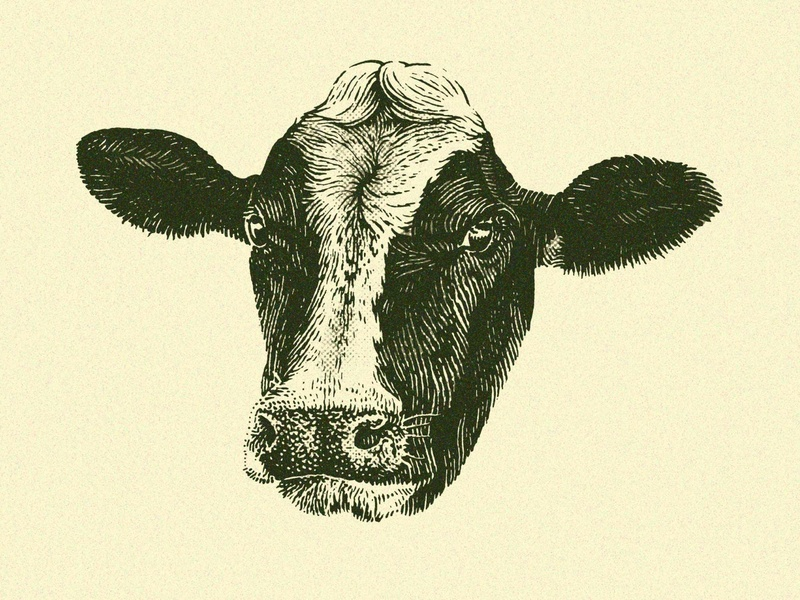 Cow Head scratchboard engraving agriculture animals animal farm cow ink pen pen and ink