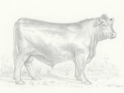 Bull classic traditional pen and ink spot food agriculture livestock animal farm restaurant beef angus cow bull illustration