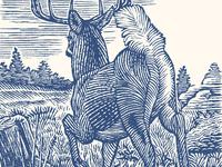 Buck line engraving scratchboard outdoors buck nature wood engraving engraving wildlife deer