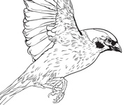 Sparrow Tattoo design 2