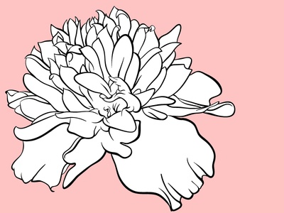 Marigold marigold flower jessica buchanan jess buchanan vector drawing illustration tattoo design tattoo design