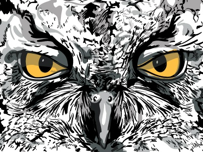 Kotori kotori owl great horned bird eyes beak face illustration drawing vector wichita kansas band