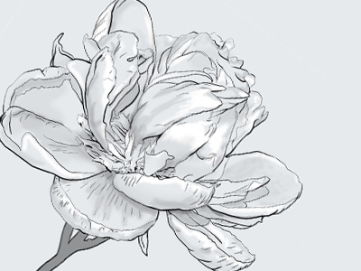 Digitally Painted Flower flower magnolia monotone petals gray black white painted illustration drawing photoshop stem