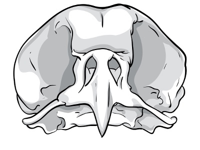 Bird Skull vector bird skull bones tattoo drawing illustration designed monochrome beak white black dead head